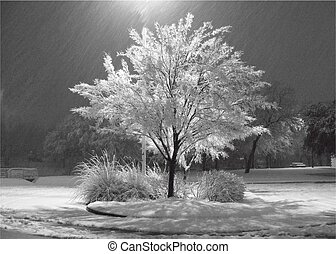 A Tree illuminated in the Snow at night
