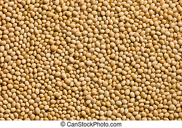 soya beans background - the photo shot of soya beans...