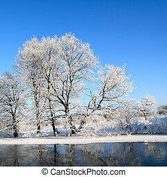 snow tree on coast river