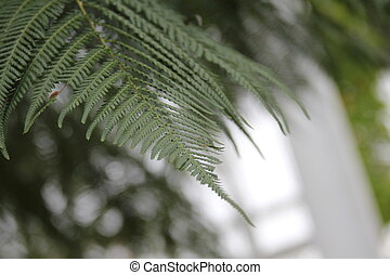 Ferns Natural Green Environment