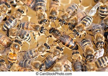 Queen bee - queen bee surrounded by her workers