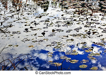White Clouds Blue Sky Lily Pads Water Reflection Abstract...