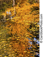 Yellow Tree Fall Leaves Lily Pads Fall Colors Reflections...