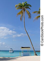 Palm Tree in the Bahamas - Palm tree and hut on a scenic...
