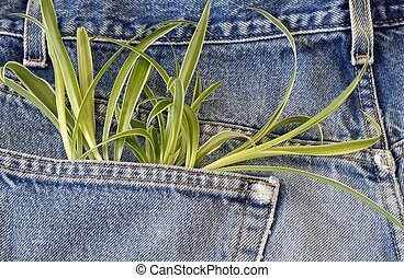 Plant growing in my pocket
