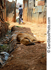 Dog in slum - Dog sleeping in the gutter in a slum alley
