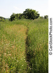 Narrow path in the field, steppe, background