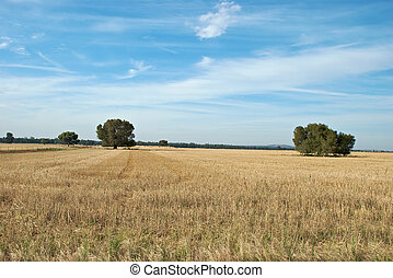 rural - a paddock of stubble in a rural landscape