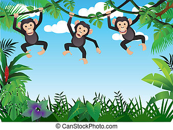 three chimpanzee
