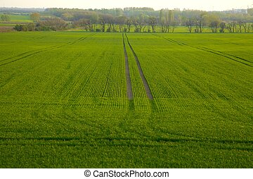 Field - Agricultural field in a rural area