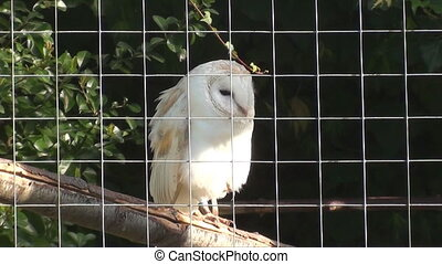 captured owl - owl in a cage