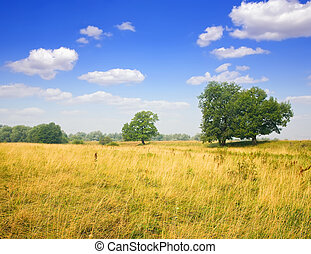 Summer landscape with meadow under cloudy sky