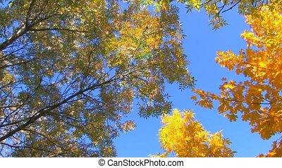 Yellow, orange, green trees