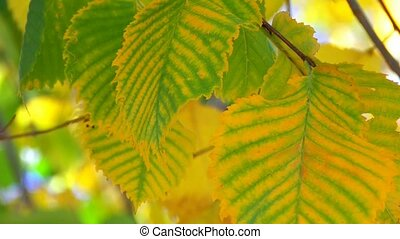 Tree branch with yellow and green