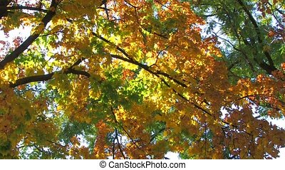 autumnal leaves - Yellow, orange, green tree branches on sky...