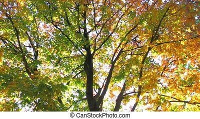 Abstract autumnal multi colored tree, bottom view, Canon XH...