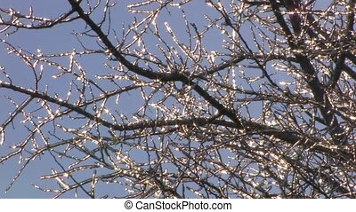 Sparkling frozen twigs on blue sky - Bare tree with...