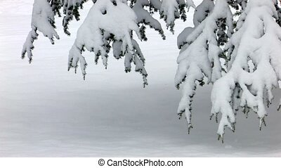 Snowcapped branches, closeup, Canon XH A1, 1080p, 25fps,...