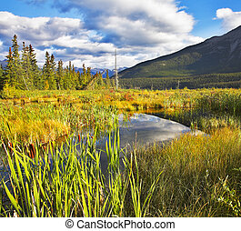Fine autumn in reserve of Northern Canada - Fine Mellow...