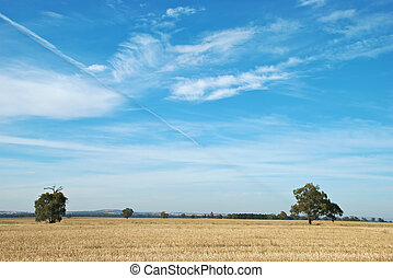 rural - two trees in a paddock of stubble