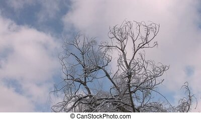 Bare winter tree with frozen twigs on cloudscape background,...