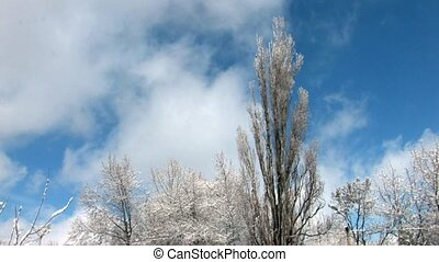 Snowbound trees on cloudscape back