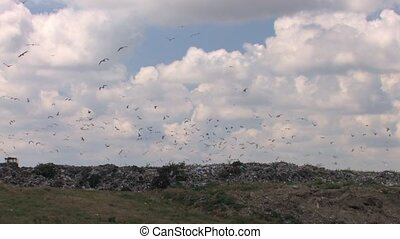 Garbage Dump and birds - Landfill waste in nature