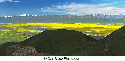 rape field in the summer sun - Valley and yellow field with...