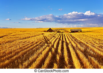 The midday on fields of Montana - Solar autumn midday on...