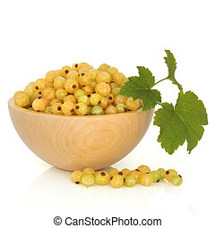 White Currant Fruit - White currant fruit in a beech wood...