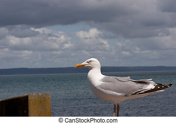 A seagull perched