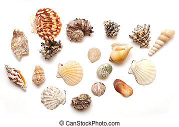 Seashell collection on white background