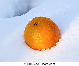 Mellow orange in white fresh snow in winter