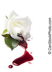 Bleeding white rose - White rose with red blood flowing away