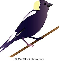 Bird illustration - An illustration of a goglu bird.