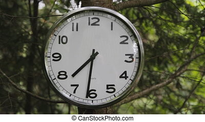 Clock in tree. Two shots. - A clock on a tree. Forest...