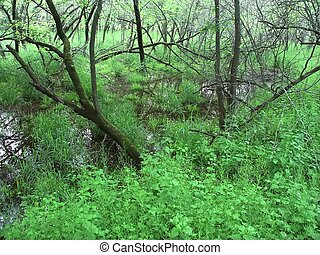 Floodplain forest - Illinois - Vegetation covers a...