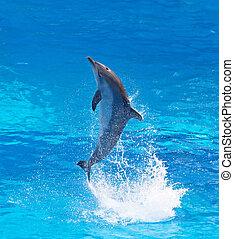 bottlenose, delfino