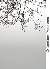 Winter branches - Pale winter branches in the middle of snow