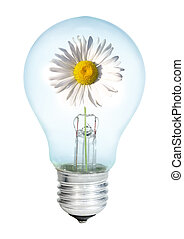 Electrobulb with oxeye on a white background