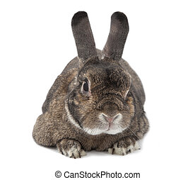 Rabbit bunny isolated on white