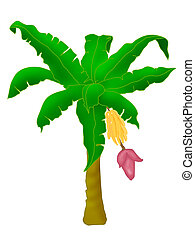 Banana tree - Plants - banana tree