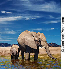 Elephants at watering - Mother and baby elephants at...
