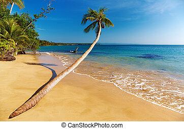 Tropical beach, Thailand - Tropical beach, coconut palm, Mak...