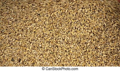 Grain - Human hand with falling barley grain
