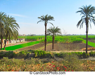 Greeny plantations in outskirts of Luxor, Egypt