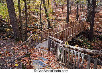 Autumn Bridge in forest with creek