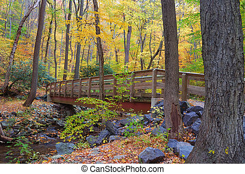 Autumn wood bridge in yellow forest