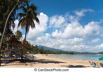Luquillo Beach Puerto Rico - The beautiful coconut palm...