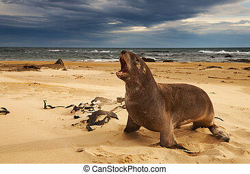 Sea lion - Wild sea lion on the beach, New Zealand
